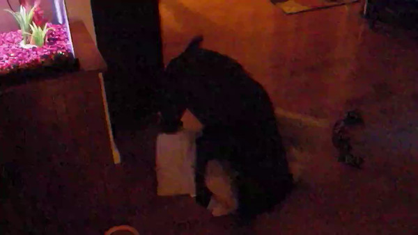 Jax humping pillow