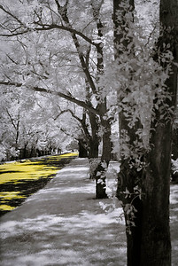Infrared; shot though the fence... Color swap ©JLCramerPhotography 2009