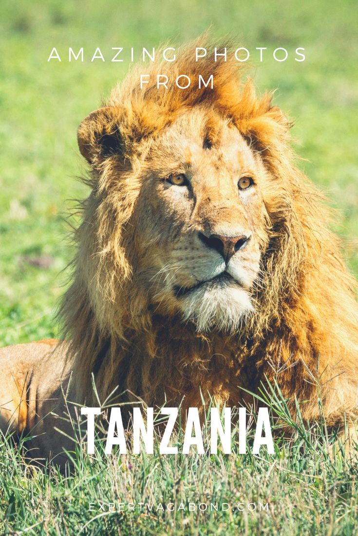15 Photos That Will Make You Want To Visit Tanzania. More at ExpertVagabond.com