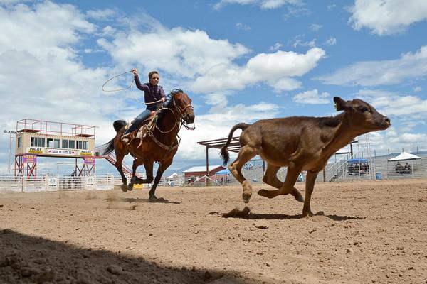 Steer Roping at 4-H Rodeo