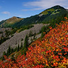Mt. Definance Fall