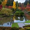 Seattle Arboretum Japanese Garden