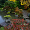 Fall Rain at the Japanese Garden