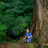 Caroline Mona Falls Rain Forest