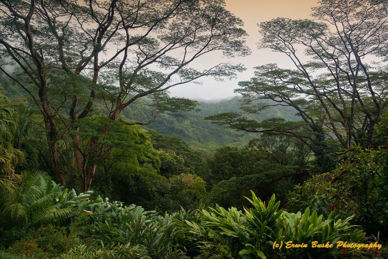 Monoa Forest