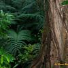 Monoa Falls Rain Forest