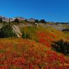 Falming Fall Meadow Colors