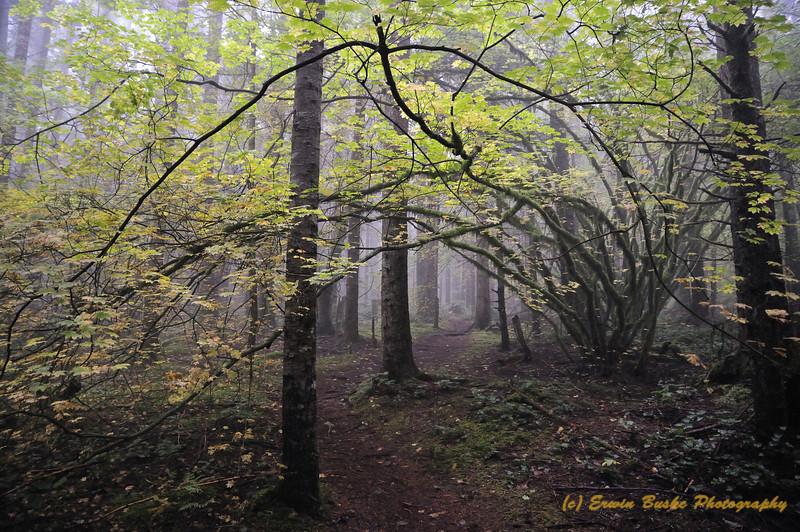 Cedar Bute Trail Fall