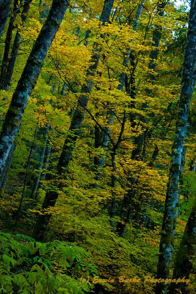 Tiger Mountain Forest Fall