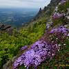 Mt. Si Monkey Flowers