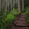 Mt. Si Trail