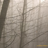 Foggy Tiger Mountain Forest