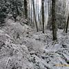 Cougar Mountain Winter