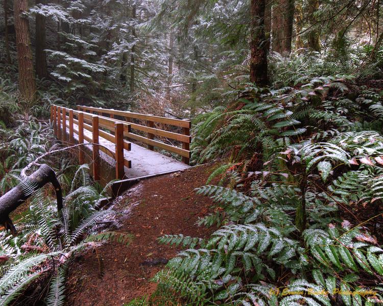 TMT Trail Bridge