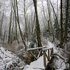 Bridge through the Snowy Alder Forest