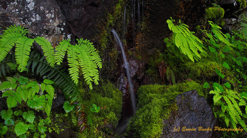 Water Spout at Fern Grotto