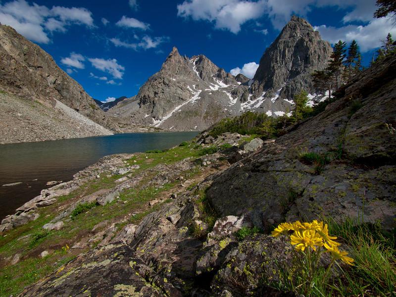 Peak Lake Sunflowers