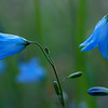 Blue Bells Beaver Park