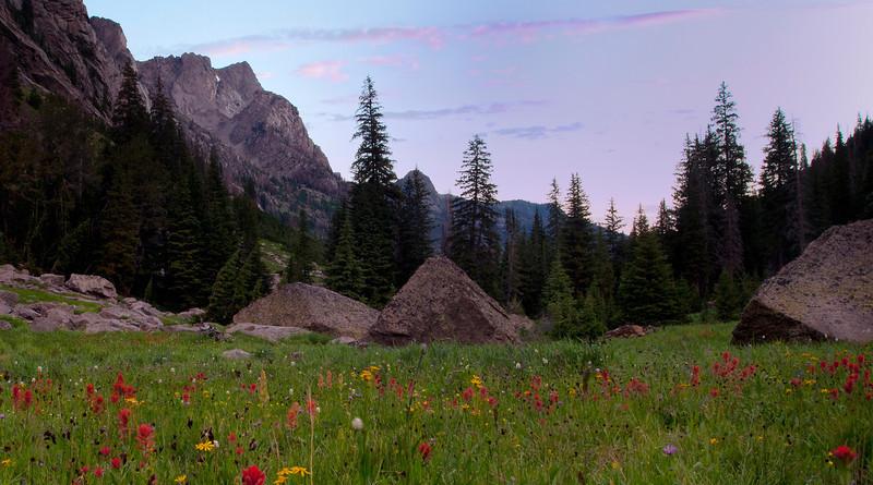 Morning: Indian Paintbrush-- Porcupine Creek Meadows