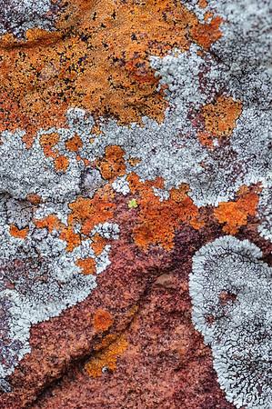 Flechten auf Fels, Ezemvelo Nature Reserve, Südafrika