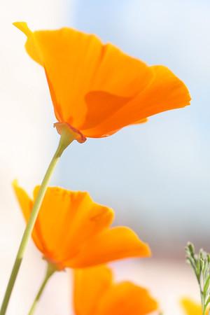 For more pictures, see poppy.smugmug.com