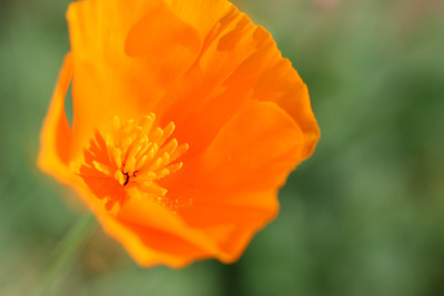 For more pictures, see poppy.smugmug.com