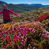 Scoparia Bloom