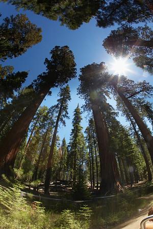Yosemite_2012_0273