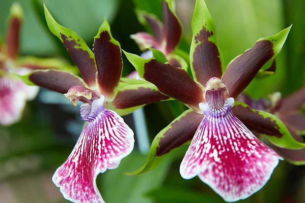 Orchids_0138
