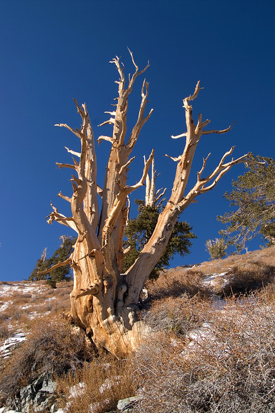 Telescope Peak Trail - Death Valley - California
