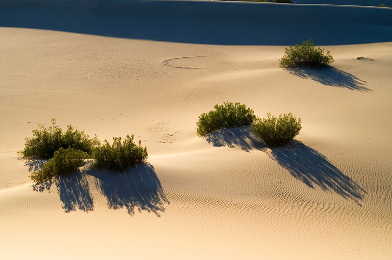 Dunes - Death Valley - California