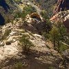 On the Observation Point Trail<br /> Looking down on the north side of the Big Bend