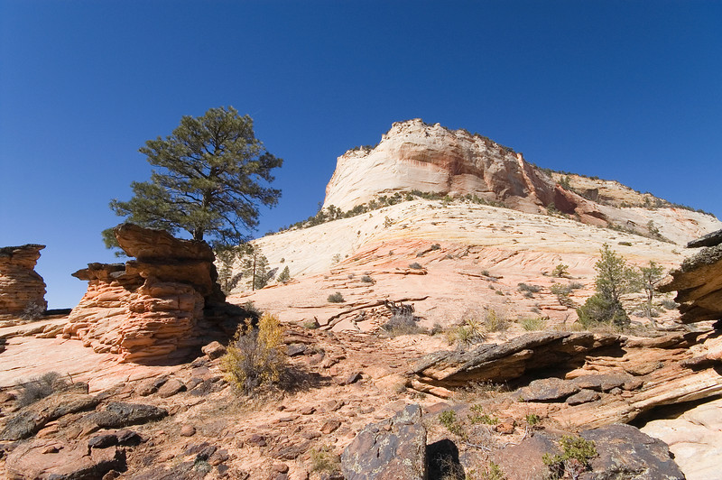 Near the east entrance, on the Zion - Mount Carmel Highway (HW 9)