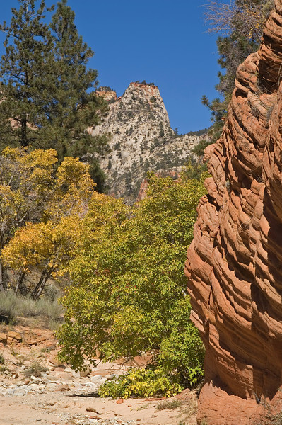 Autumn colors and dry riverbed<br /> Near the east entrance, on the Zion - Mount Carmel Highway (HW 9)