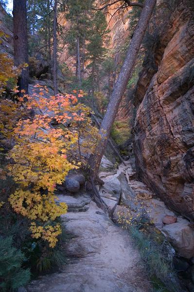 In Hidden Canyon