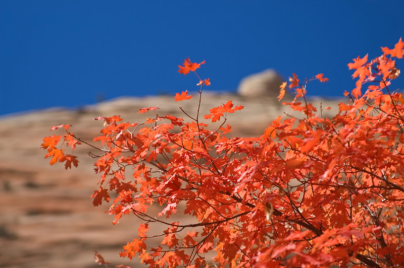 Autumn colors<br /> Near the east entrance, on the Zion - Mount Carmel Highway (HW 9)
