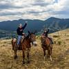 Carl the Mule