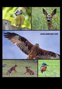 Best of Stokerpix Mousemat Collage