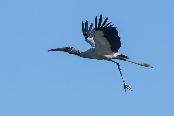 Birds of Costa Rica 2010