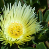 Yellow Flower<br /> <br /> Artie Morris Workshop<br /> Morro Bay, CA
