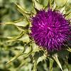 Purple Flower<br /> <br /> Artie Morris Workshop<br /> Morro Bay, CA