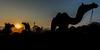 Dawn at the 2013 Pushkar ka Mela (Camel Fair)