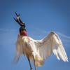 Jabiru Stork
