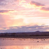 Cranes and Geese Settling Down for the Night<br /> <br /> Bosque del Apache<br /> Socorro, NM