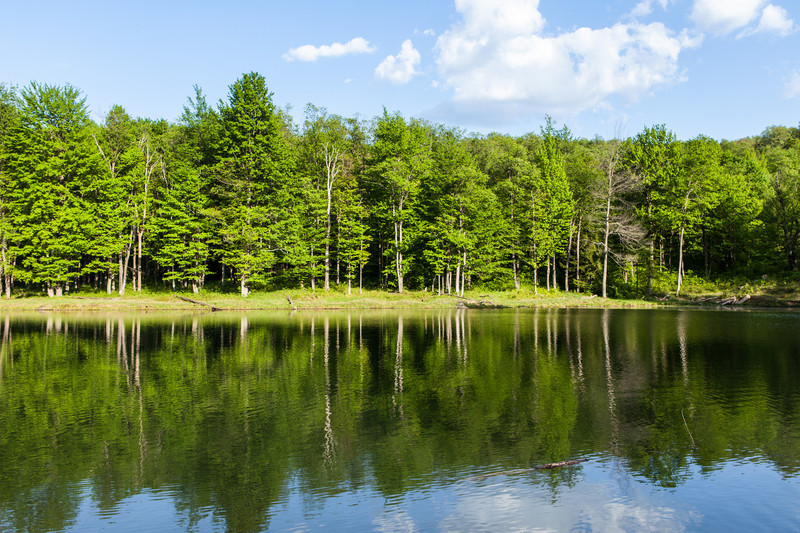 Forest Reflected in the Lake