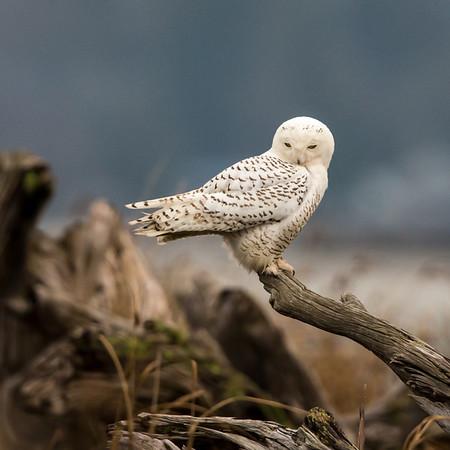 Winter Birds of the Northwest