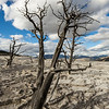 Dead trees in an area of intense deposition of calcium carbonate at Canary Springs