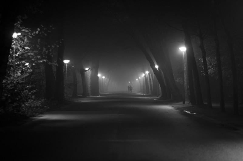 Vondelpark in the Fog