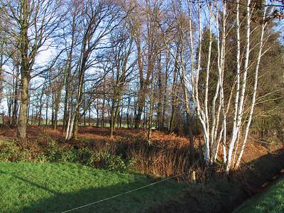 2000-12 De omgeving van Lattrop