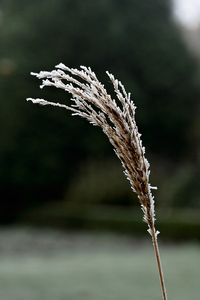 Ice crystals in our garden
